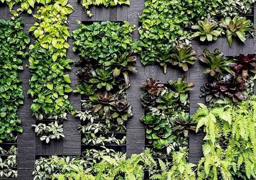 vertical garden1 1