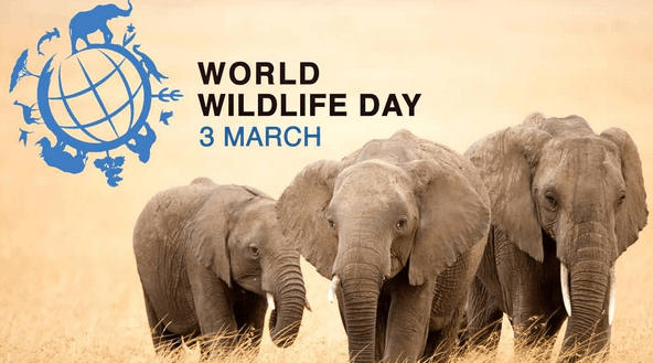 World Wildlife Day on 3rd March