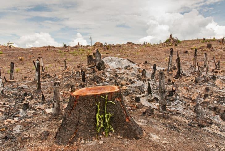 deforestation logging cut forests 1